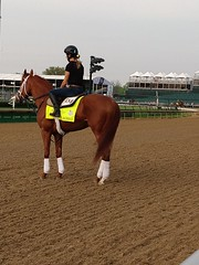 vino rosso (atthepaddock) Tags: kentucky derby vinorosso thoroughbred pictures horses