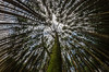 Bavarian Wood 1 (Bilderschreiber) Tags: trees tree bäume baum wald wood holz fokus focus bavaria bayern