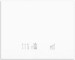 Cattails in Snow, Grand Pré (Fundy Rocks) Tags: winter grandprénationalhistoricsite grandpré snow snowfall blackandwhite cattails intimatelandscape fineartprint fineartphotography