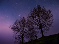 Stars & trees (f.dalmulder4) Tags: olympus omd omdem5 1240mmf28pro microfourthirds micro43 mft stars sky starstrees flevoland oostvaardersplassen