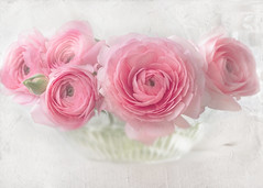 Beauty is everywhere a welcome guest. (BirgittaSjostedt) Tags: ranunculus flowerplant bowl bouquet texture card flowercard beauty romantic feminin soft