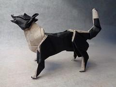 Border Collie (mrmicawer) Tags: papiroflexia origami papel border collie perro dog mascota pet ladrar bark