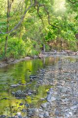 _DSF2073-Edit-Edit.jpg (Stephen C3) Tags: arborhillsnaturepreserve river