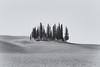 Cypress Grove (Andrew G Robertson) Tags: tuscany toscana italy cypress grove tree torrenieri montalcino val dorcia san quirico