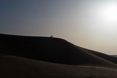 sunset (Guy Goetzinger) Tags: goetzinger d500 nikon morocco maroc dune desert erfoud gegenlicht photographer 2018 top best