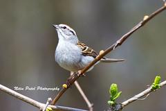 IMG_5863 (nitinpatel2) Tags: bird nature nitinpatel