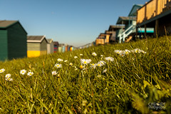 Lazy Sunny Afternoons... {EXPLORED} Thanks! (Chrisipe Photography) Tags: tankerton slopes beachhuts summer bankholiday sunny daisies canon5dmkiv whitstable kent seaside beach canon ef24105mmf4lisusm explored