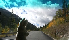 Are Aways Always A Ways Away? (shiroibasketshoes hopper) Tags: bunny road drive sriving rabbit car away colorado driving trees