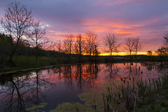 May Day (Matt Champlin) Tags: monday life work nature landscape pond frogs frog sunset reflection forest trees peace peaceful quiet calm calming spring may canon 2018