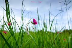 Le printemps est là (Ezzo33) Tags: france gironde nouvelleaquitaine bordeaux ezzo33 nammour ezzat sony rx10m3 parc jardin fleur fleurs flowers flower red rouge rose pink