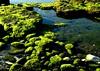 Cuando baja la marea (camus agp) Tags: costa mar marea mediterraneo rocas verde musgo