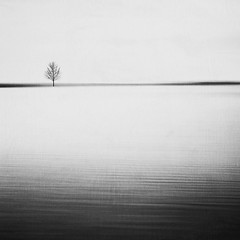 solitude (rwasinger) Tags: solitude solitär lonely simple simplicity bw blackandwhite schwarzweiss monochrome monochrom fineart art tree lonelytree baum see lake landscape landschaft abstrakt abstract renatewasinger 2augenblick chiemsee minimalismus minimal minimalism minimalist