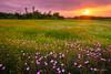 Wild Trinity (Rajesh Jyothiswaran) Tags: cityscape dallas nature reunion spring texas tower beautiful buildings coneflower downtown flowers greenery native primrose skyline skyscrapers sunrise sunstar urban wildflower