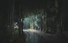 2552 (Keiichi T) Tags: 夜 木 canon tree light eos shadow 夜景 green forest 影 road 日本 森 6d 道 night japan 光