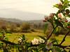 Águas Frias (Chaves) - ... a primavera florida ... (Mário Silva) Tags: aldeia águasfrias chaves trásosmontes portugal ilustrarportugal madeinportugal lumbudus máriosilva maio 2018 primavera flores flor florcampestre flora paisagem