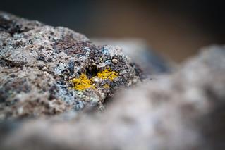 Lichen on Volcanic Rock