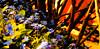 Pls don't forget me (evakongshavn) Tags: flora forgetmenots forglemmegei blomster blomst blå light blue flower flowers spring springflowers springflower20172018 springiscoming springishere art artistic fineartphotography fineart