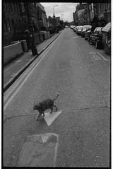 M2 2018 05 11 (Sibokk) Tags: beasts camera cat film leica m2 photography portobello scotland uk edinburgh