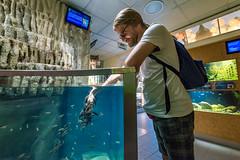 Wien 2017 - Haus des Meeres (karlheinz klingbeil) Tags: fisch fish water wasser tier animal austria aquarium city zoo vienna österreich stadt wien at