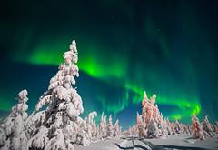 Northern lights (Naturetrek Wildlife Holidays) Tags: aurora polar light northern night winter landscape snow trees green alaska scandinavia canada america yakutia lapland siberia road path step north russianfederation