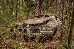 Empty Heads (Wayne Stadler Photography) Tags: abandoned preserved junkyard georgia classic automotive derelict overgrown vehiclesrust rusty retro vintage oldcarcity rustographer rustography white