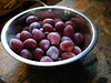 HomegrownPlums (totalescape.com) Tags: plum plums tree bowl homegrown california berry creek sierra nevada sierras mountains foothills grow