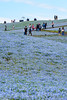 20180415-DS7_4289.jpg (d3_plus) Tags: 雨 丘 landscape d700 路上 cloudy streetphoto 日常 80200mmf28 thesedays dailyphoto street tele sea garden 望遠 遊園地 自然 海岸 景色 daily ガーデン plant park rainy telephoto 空 rain japan 曇り ニコン sky amusementpark ibaraki nikon nikond700 aiafzoomnikkor80200mmf28sed flower 80200mmf28af 花 8020028 路上写真 hill 植物 海 nature 80200mmf28d 地形 scenery 80200mm 茨城 庭園 ストリート nikkor 公園 日本 bloom 80200 jr beach