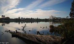 Lake Rotoroa hamilton nz (rogsykes) Tags: rotoroa lake sonya77ii ndfilter reflection hamilton new zealand nz water beautyofwater