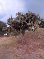 DSCN1564 (Sasha India) Tags: teotihuacan mexico 테오티우아칸 テオティワカン 特奥蒂瓦坎 мексика латинскаяамерика теотиуакан путешествия путешествие подорожі подорож мандри travel viajar voyage viaje