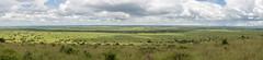 Nairobi-Nationalpark-6131-Pano (ovg2012) Tags: kenia kenya nairobi nairobinationalpark safari