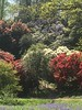 Lydney Park (Ronald Hackston) Tags: may spring bankholiday lydneyparkestate lydney park estate gloucestershire severn gardens stately home flowers