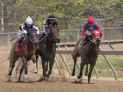 2018 Pimlico Race track (10) (maskirovka77) Tags: pimlico dirt mare race racehorse threeyearold turf yearling