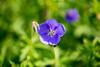 DSC04447.jpg (chagendo) Tags: sony sonyalpha7ii pflanzen blumen natur outdoor makro makrofotografie 90mm