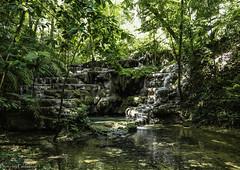 In the rainforest / В тропическом лесу (Vladimir Zhdanov) Tags: travel mexico palenque landscape nature tree forest rainforest selva water river otulum chiapas rock waterfall