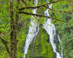 Trees and Falls (horizontal) (jamesdelbertanderson) Tags: northcascades cascades waterfall washington forest boulderrivertrail mountbakersnoqualmienationalforest mtbakersnoqualmienationalforest