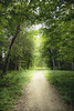 It's just a walk in the park II (anek07) Tags: forrest walk park trees green may summer spring annaekman nikon flickr light greenlight fairytale dream love