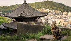 Onomichi (hswrrswa7) Tags: hiroshima onomichi japan cat