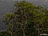 Safe & Sound (shamahzoha) Tags: storm stormy nature trees branches green greenery leaves drops water raindrops rain glass reflection lines droplets hazy obscure abstract gloomy glum weather streetphotography