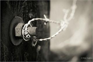 Someday no barb wire, no fence, no warfare