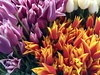 Tulip Time (jchants) Tags: 118in2018 tulips red yellow purple white pikeplacemarket marketvendor flowervendor 27atthemarket