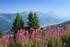 20170830-Canon EOS 6D-3045 (Bartek Rozanski) Tags: schladming steiermark austria planai alps alpine austrian mountains