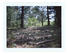 ... (Andrey Timofeev) Tags: 06may2017 mamiya universal mamiyasekor 100mm f35 expired fujifilm fp100c iso 100 usebefore201611 rangefinder дальномер polaroid land camera back instant colour pack film crimea крым