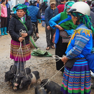H'mong women selling their black pigs