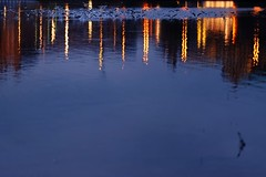 (Px4u by Team Cu29) Tags: nacht dresden elbe möwe vogel licht reflektion spiegelung gebäude