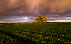 April (Eifeltopia) Tags: field rainbow regenbogen shadow rainy clouds landscape südeifel tree lonetree germany rheinlandpfalz sunset sundown april weather changeable wechselhaft momentintime hunting sky himmel regen feld landwirtschaft stilllearning aprilwetter brancoconsdorf