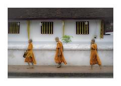 Novice monks (jen 3163 (OFF for a while)) Tags: monks novicemonks prabang laos luangprabang children buddhism takbat alms religion robes