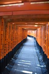 Fushimi Inari-taisha - Kyoto Japan (PierBia) Tags: fushimi inaritaisha kyoto japan giappone nikon d810