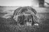 Jessy <3 (MonieHoleva) Tags: animal dog puppy outdoor garden forrest magic moment art nikon slovensko slovakia landscape emotions happy fineart nature sunflare goldenhour dogseyes dogportrait dogphotography indoor indoorportrait cutepuppy dogphotographer portrait countryside lifestyle pet