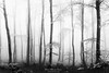 This is the forest (Mimadeo) Tags: forest fog trees tree foggy misty mist beech trunk trunks landscape light mystery mysterious ethereal gloomy black white blackandwhite lichen spooky bare nature wood woods fantasy dreamy magic beautiful bright