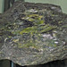 Serpentinite (Greenville, Plumas County, California, USA)